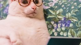 chat lunette
