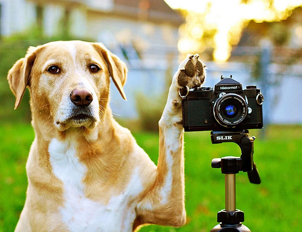 Un chien avec un appareil de photo