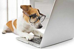 chien intellectuel