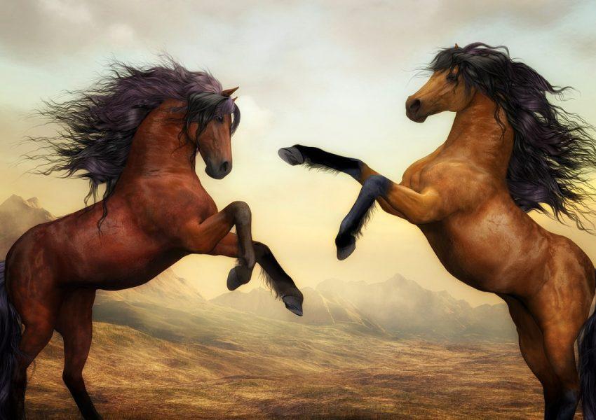 Les chevaux ont besoin d'une alimentation spécifique