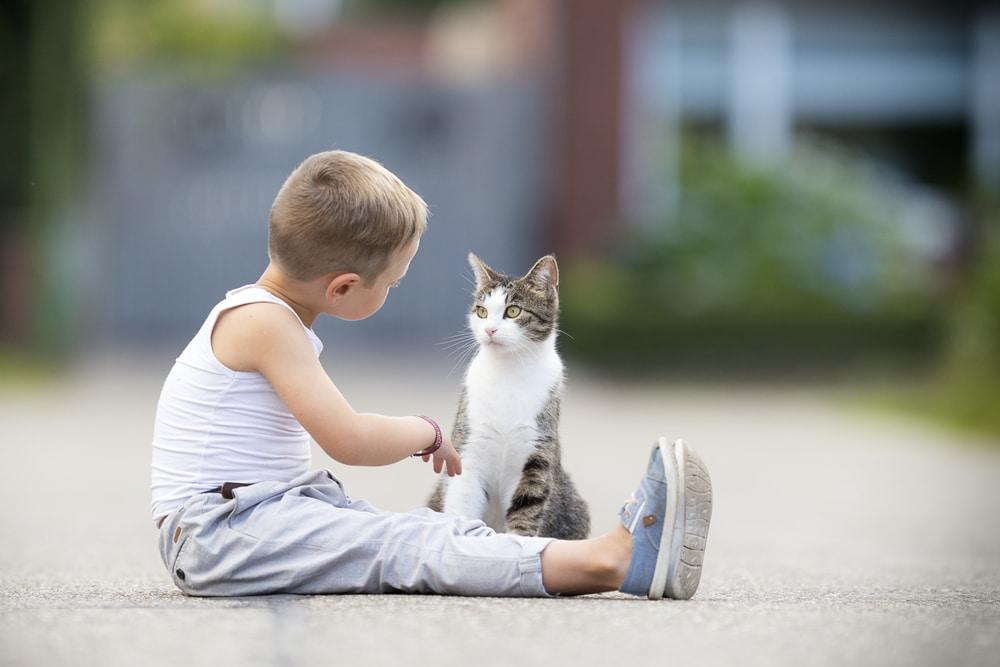 parler aux chats