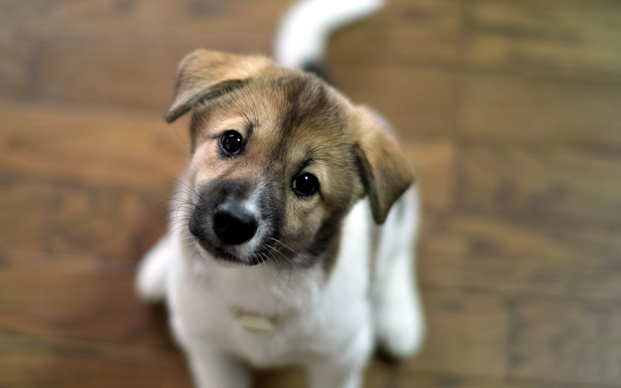 le plus beau chien
