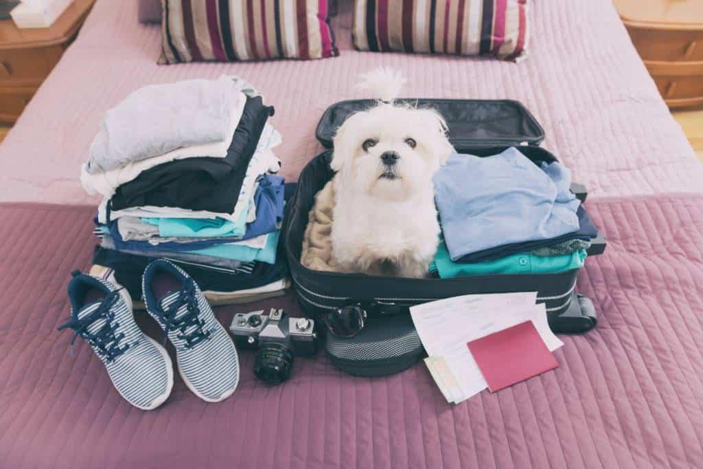 voyage chien